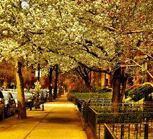 Springtime! by LudaNayvelt