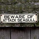 Beware of Attack Seagulls by Rebecca Dru