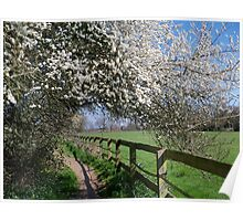 Springtime Walk Poster