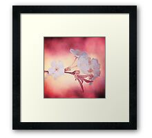 Texture and Cherry Blossom Framed Print