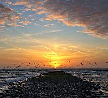 Sunset Birds by Hetty Mellink