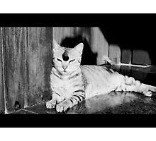 Catattitude Photographic Print