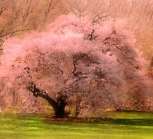 Four Seasons Magical Spring by Romanovna Fine Art Prints