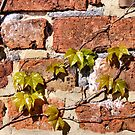New Leaves Old Wall by Jazzdenski