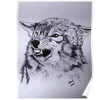 Canada grey wolf 1 Poster