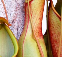 Pitcher Plants Sticker