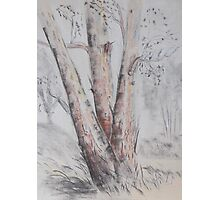 Tree landscape in Narrabri NSW Photographic Print
