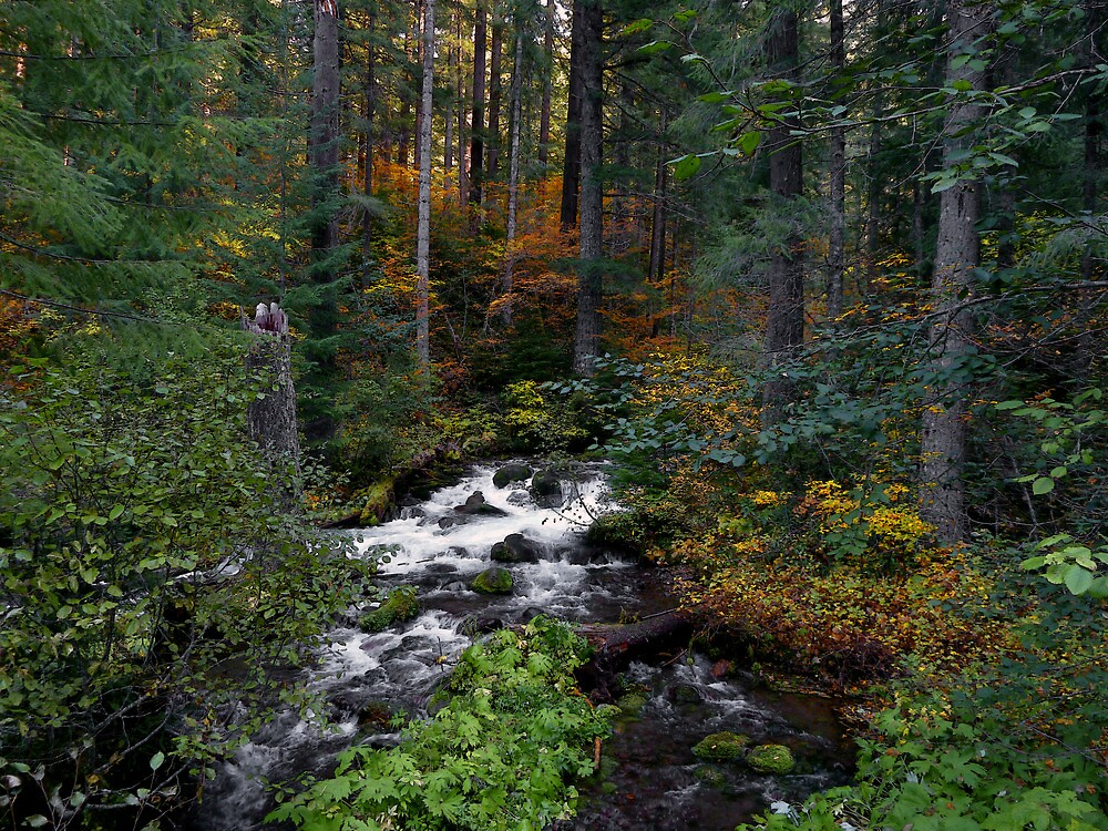 Roaring River ~ Oregon Cascades ~ by Charles & Patricia   Harkins ~ Picture Oregon