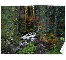 Roaring River ~ Oregon Cascades ~ Poster