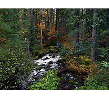 Roaring River ~ Oregon Cascades ~ Photographic Print