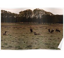 richmond park april 2012v6 Poster