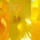 Sending You Sunshine... by LindaR