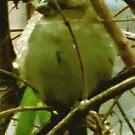 The Sparrow by ArtOfE