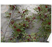 Nature-made Ikebana V Poster