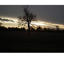 old tree sunset Photographic Print