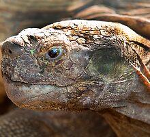 Giant Tortoise says Hi I'm Big by imagetj