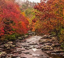 Tellico River in the Fall by Kellie Sharpe