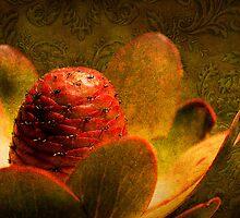 Protea by Emma  Gilette