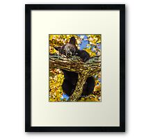 Sweet Black Bear Cub Framed Print
