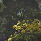 Morning Light On The Neighborhood - Luz De La Mañana Sobre La Vencidad by Bernhard Matejka