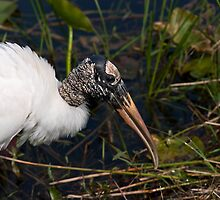STOCK ~ Woodstork #1  by Rick & Deb Larson