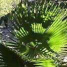 Palm Tree - Palma by Bernhard Matejka