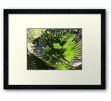 Palm Tree - Palma Framed Print