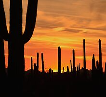 Sundown Tucson  by Judy Grant