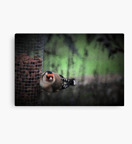 Goldfinch on the feeder Canvas Print