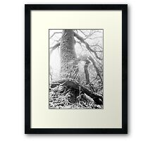 Nature 13 Framed Print