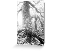 Nature 13 Greeting Card