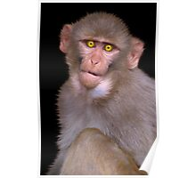 Young Rhesus Macaque Paintover Effect Poster