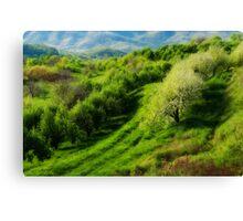 Blue Ridge Mountains Apple Orchard Canvas Print