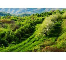 Blue Ridge Mountains Apple Orchard Photographic Print