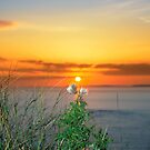 tall thistles on the wild atlantic way at sunset by morrbyte