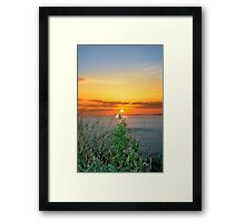 tall thistles on the wild atlantic way at sunset Framed Print