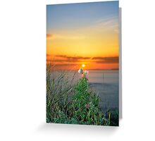 tall thistles on the wild atlantic way at sunset Greeting Card