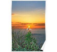 tall thistles on the wild atlantic way at sunset Poster