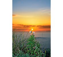 tall thistles on the wild atlantic way at sunset Photographic Print