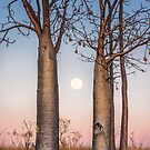 A Kimberley Moonrise by Mieke Boynton