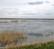 Flooded prairieland by Erika Price