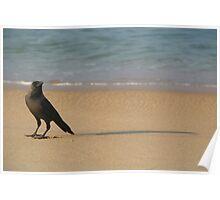 Crow on the Sand Varkalala Poster