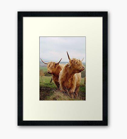 @SCOTTISH COWS Framed Print