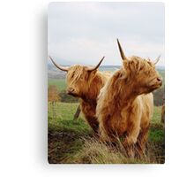 @SCOTTISH COWS Canvas Print