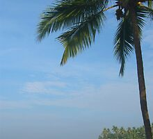 Palm Trees on the Cliff Varkala by SerenaB