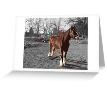 Landis Valley Horse and Red Wagon II Greeting Card