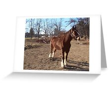 Landis Valley Horse and Red Wagon I Greeting Card