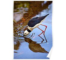 Water Bird Poster