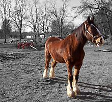 Landis Valley Horse and Red Wagon III by purplefoxphoto