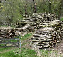 wood stacks by shireengol